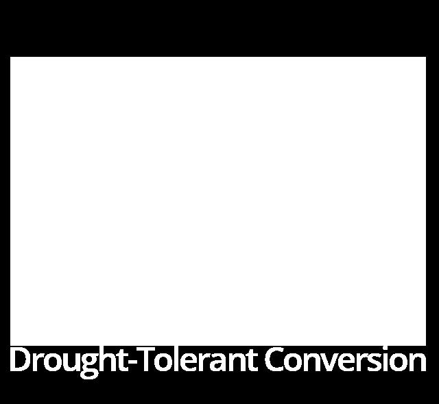 Drought-Tolerant Conversion